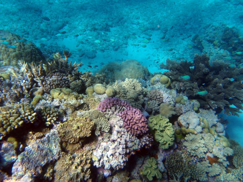 Underwater editing